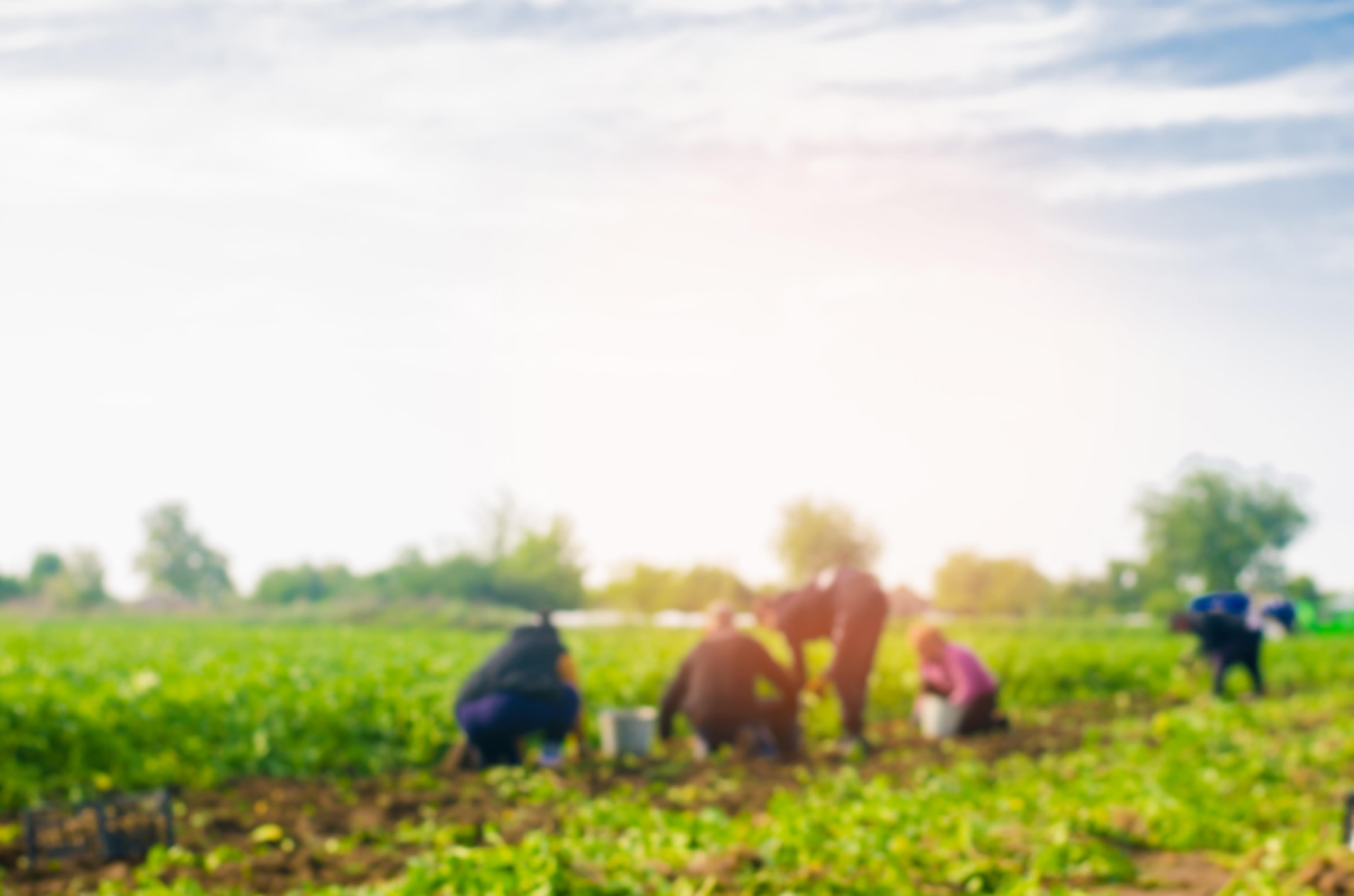 Imagem com pessoas trabalhando no campo
